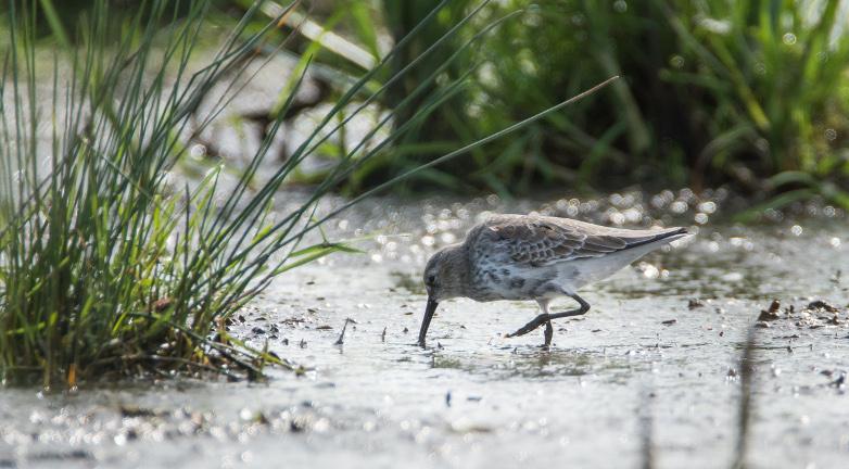 rezerwat_ornitologiczny_beka